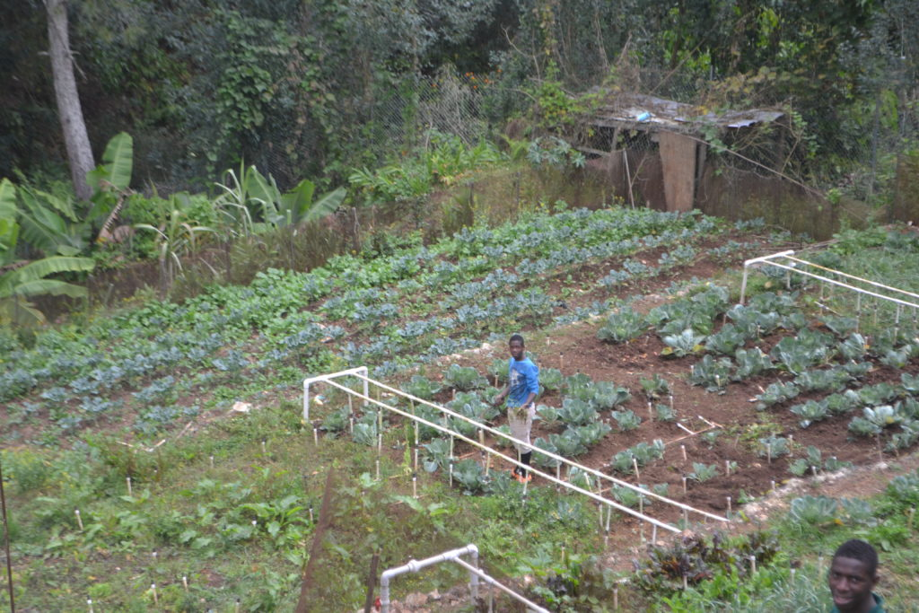 Kenscoff Sustainable Garden Established